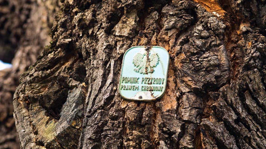 Bartholomew tree