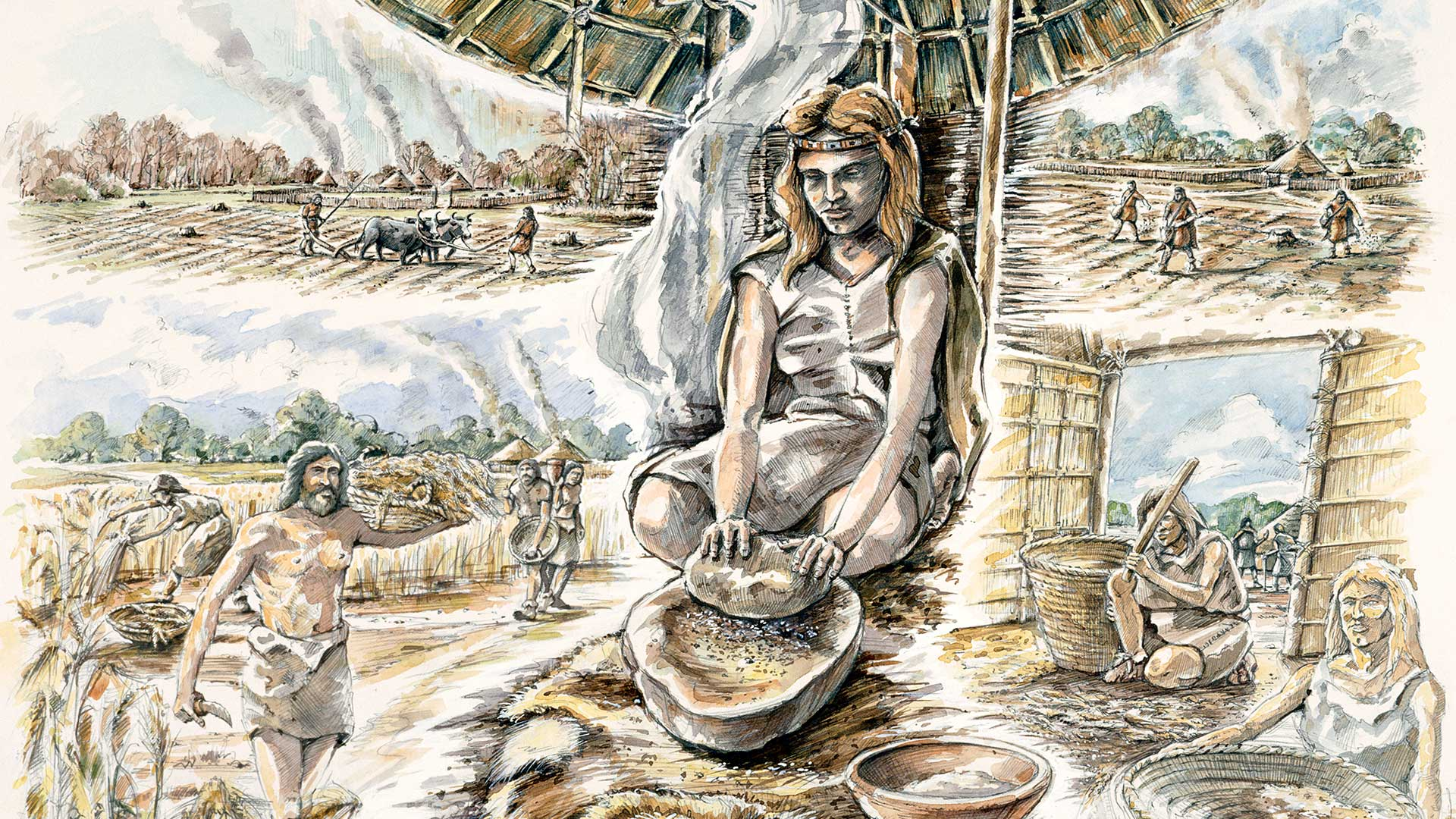 Neolithic Grain Production