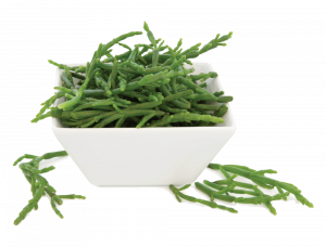 Samphire in a porcelain square dish over white background. Salicornia europaea.