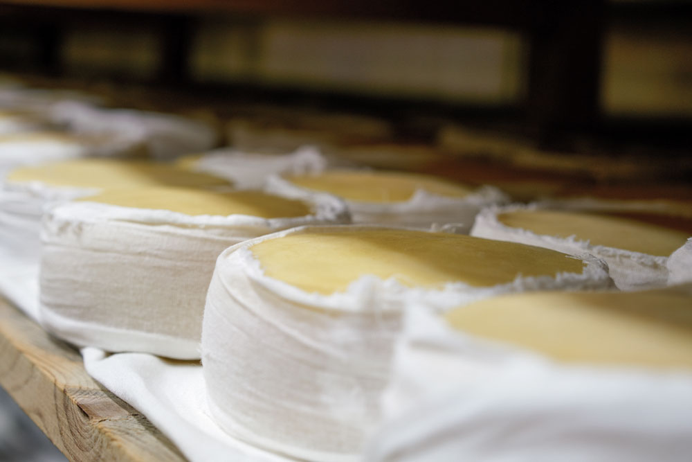 Cheeses from Portugal's Serra da Estrela region