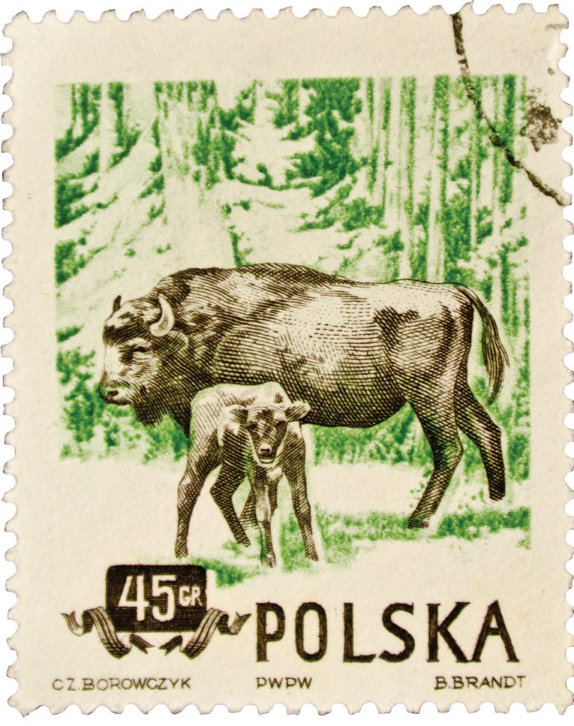 POLAND - CIRCA 1960: A stamp printed in Poland shows Wild Bisons, series, circa 1960