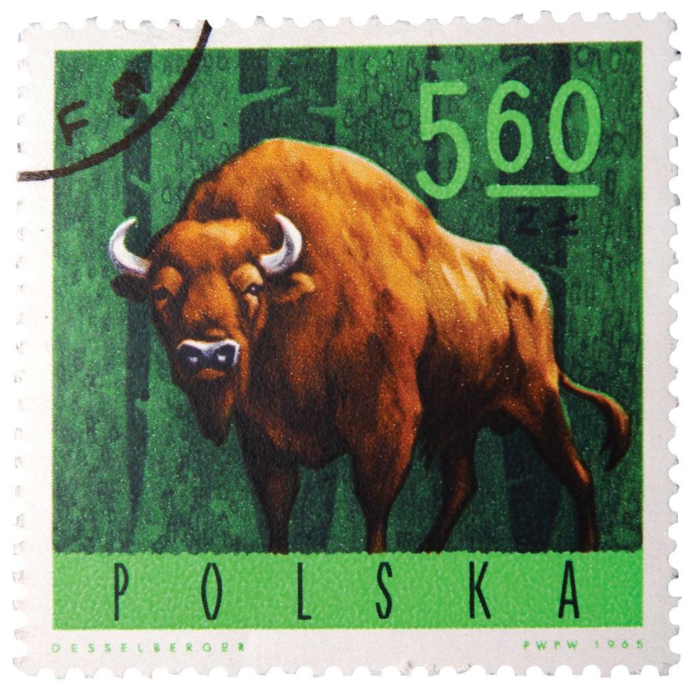 POLAND - CIRCA 1965: A stamp is printed in Poland, shows a bison, circa 1965.