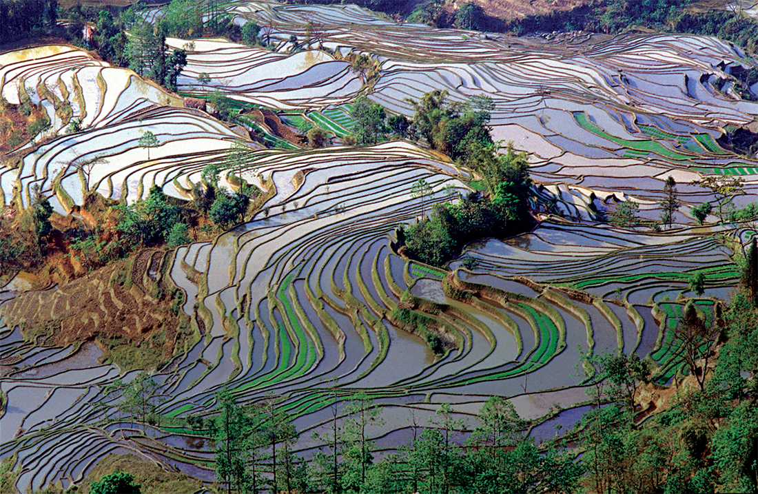 Terrace rice field in spring time at Mengpin Village, Yuanyang County, Yunnan China.