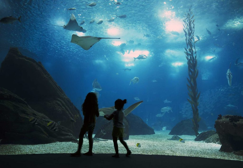 Two young boys looking at the biggest fish Oceanario.
