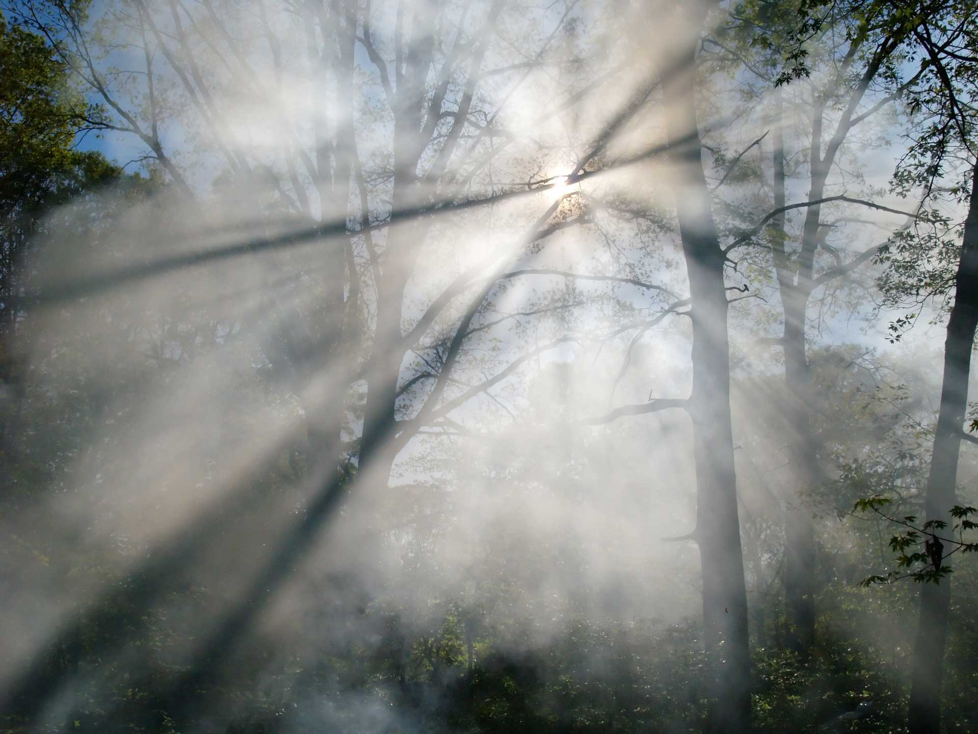 Smoke from a forest fire rises through the trees in a forest. Sunlight filters through the haze.