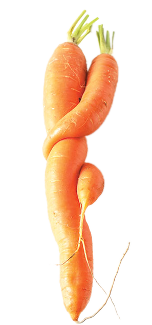 closeup of funny carrots on white background