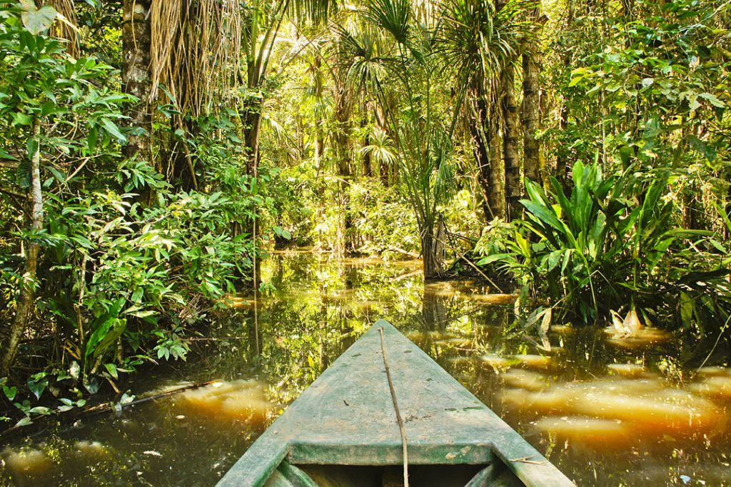 Amazon Basin, Tambopata National Park, Peru