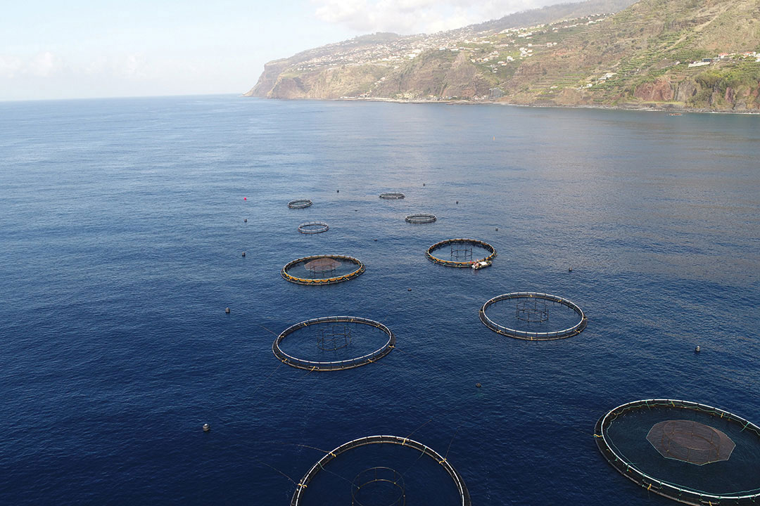 Sea bream began to be produced in September 2017 in this unit set up in Madeira.
