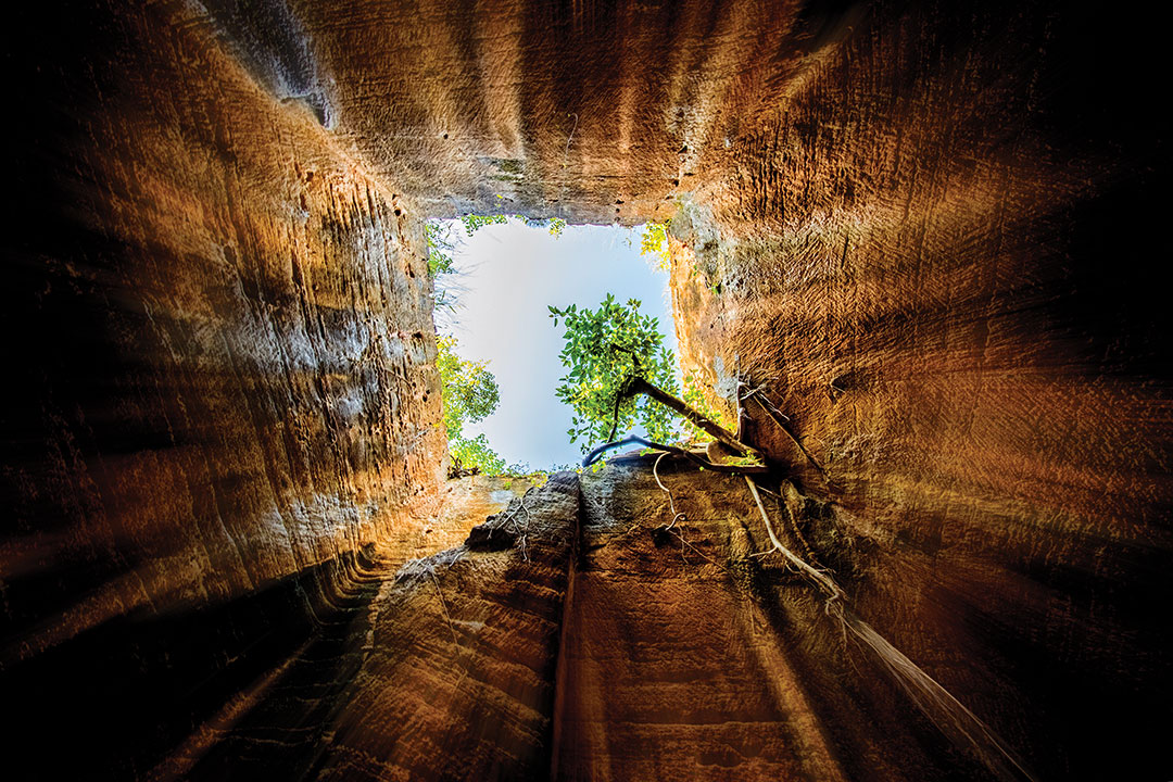 A tree is seen growing up inside the Naida cave while looking upside. The shot was taken in Naida Caves, Diu, India.