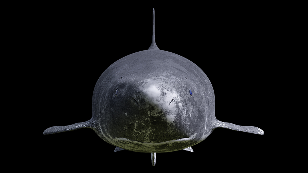Greenland shark isolated on black background, Somniosus microcephalus front view