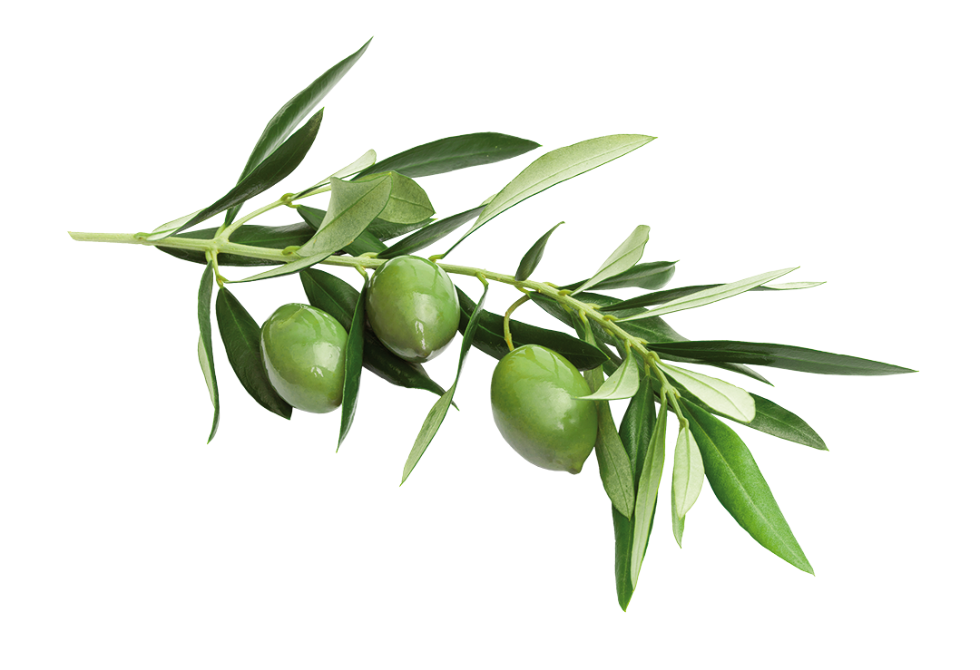 isolated olives on white background
