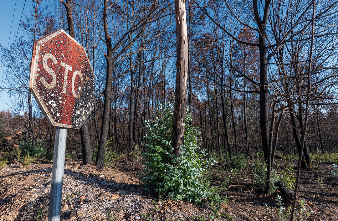 Burned road sign and trees recuperating their green four months after the forest fire on October 06, 2017 in Vila Facaia, Portugal.